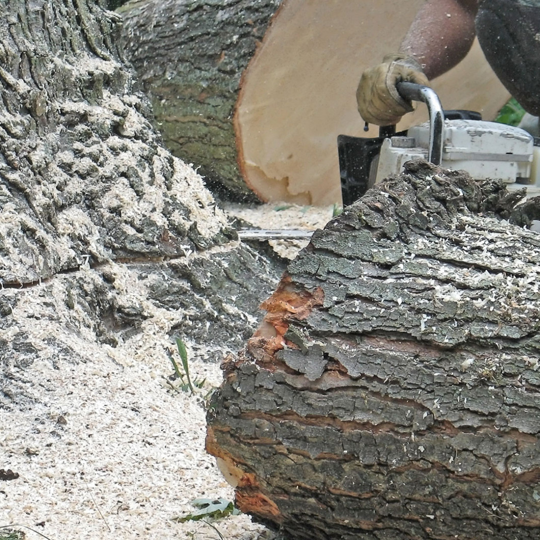 Get rid of dangerous trees right now