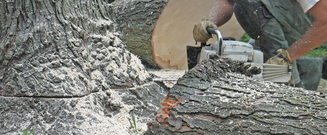 Take Down Dead, Decaying or Dangerous Trees